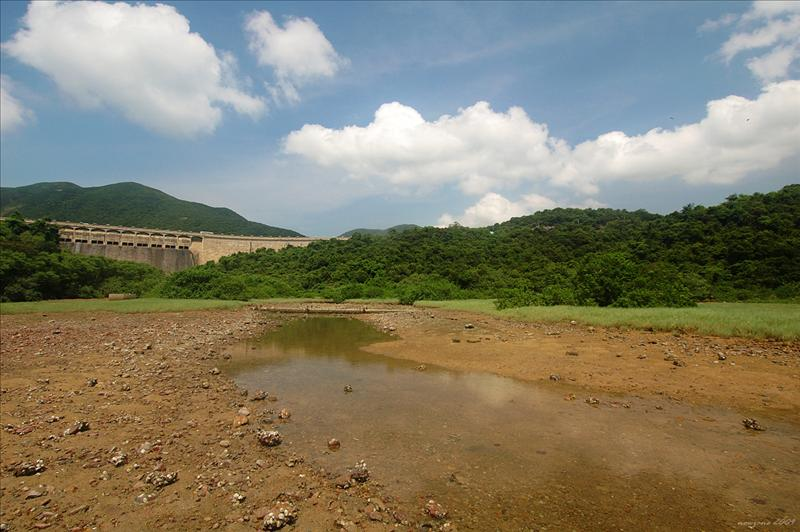 Mangrove at sheltered Tai Tam Harbour 大潭篤泥灘海岸