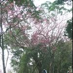 大山背山大崎棟步道 (2).JPG