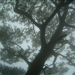 2006.07.08霧隱面天山