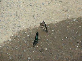 一對蝴蝶.MOV