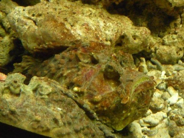 A rock fish