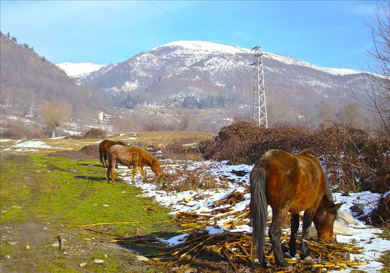 Zlatitsa