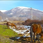 08 Dec '07 - Zlatitsa