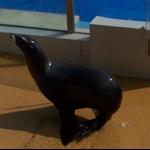 海洋公园海洋剧场海狮表演.jpg