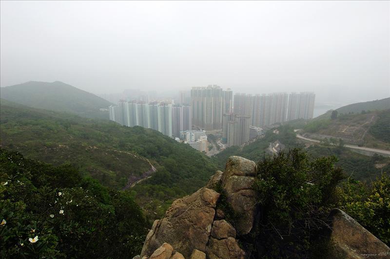 上五桂山途中望向東面的調景嶺