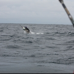 Fishing for Marlin. I really wanted the fish to get free but the stupid thing ate both lines so it had no chance