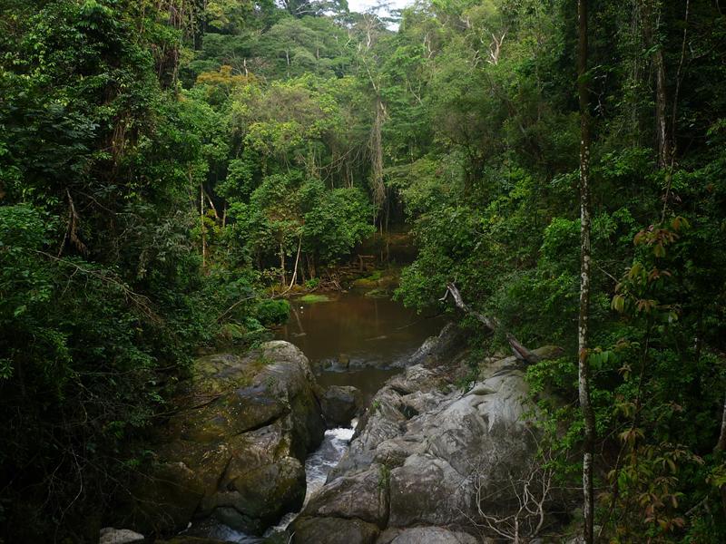 Ankasa-Nini-Suhien Nationalpark - Regenwald pur