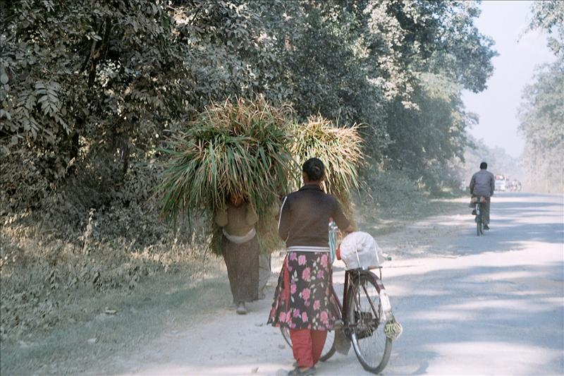 Driving out of Chitwan