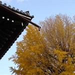 Nishihonganji09,12,6 02.jpg