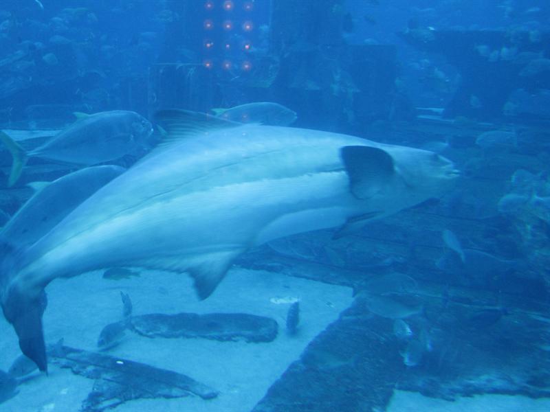Aquarium at Atlantis Hotel