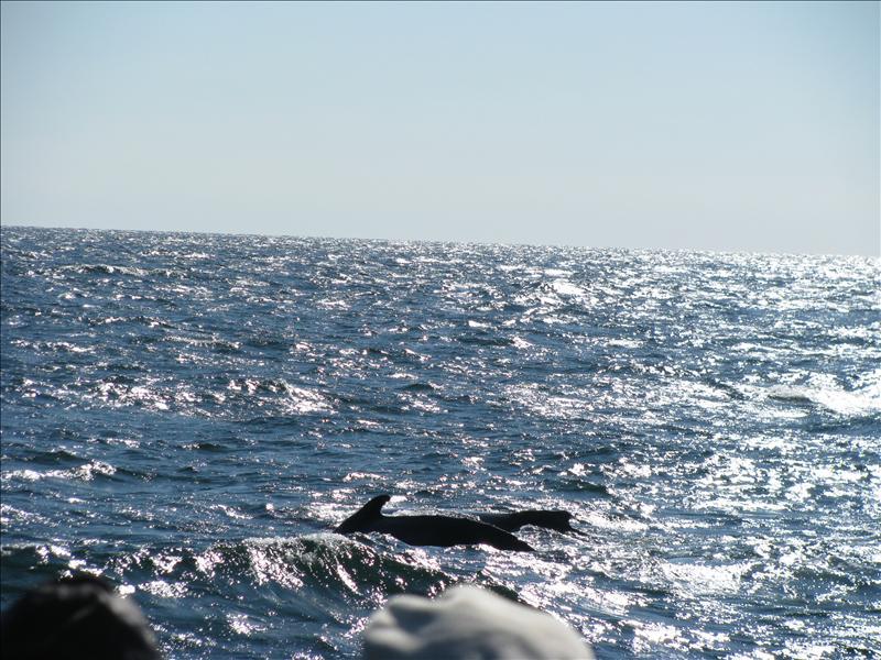 humpback met jong