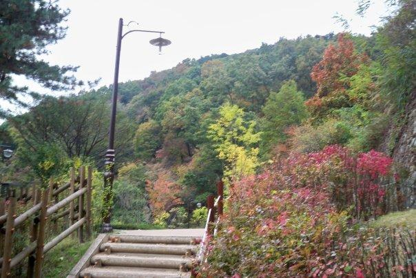 10/22 - namhansanseong park -   fall is finally coming to korea :D