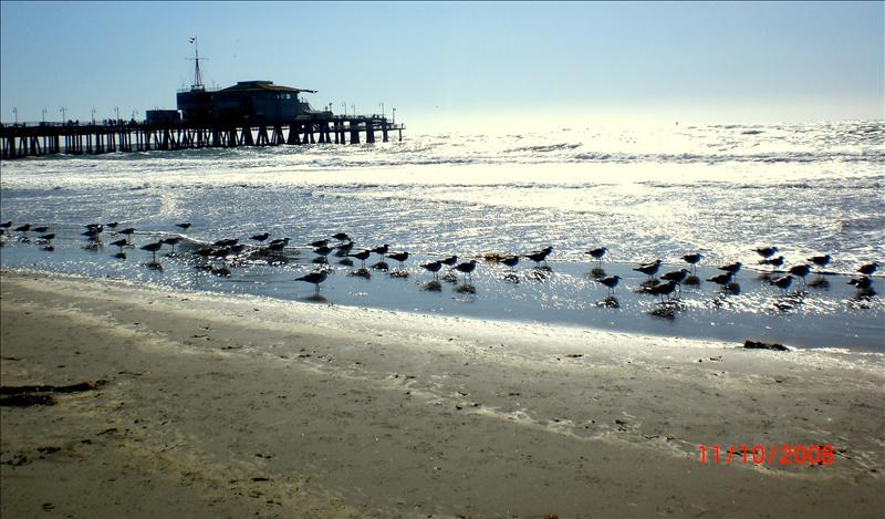 栈桥和海鸟
