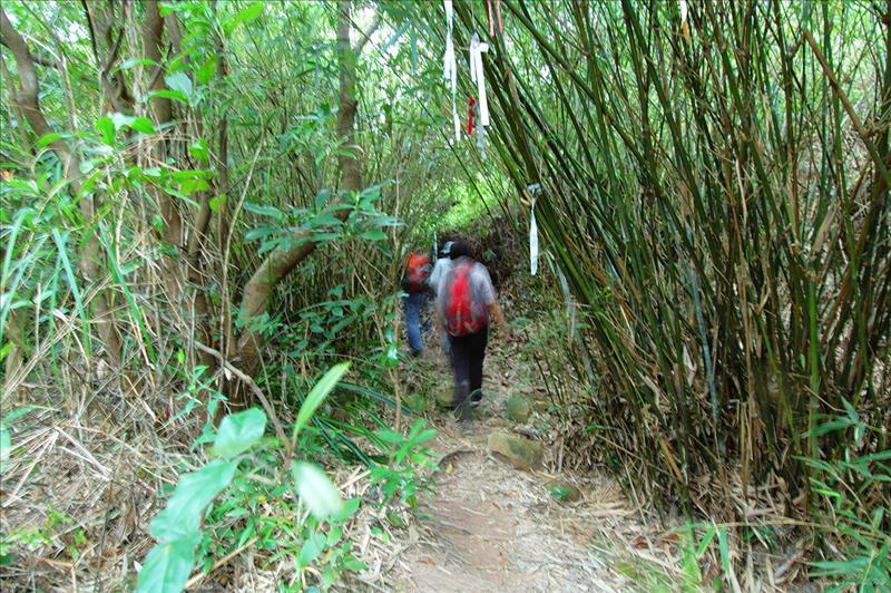進入迷蹤走廊的竹林