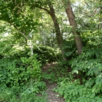 Trail to camping area on Island 93