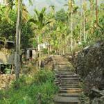 Dorf im Urwald von Meghalaya
