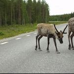Schweden&Norwegen 2010 015.jpg