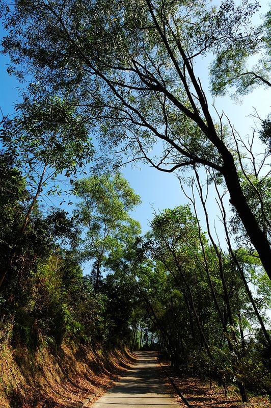 大欖自然教育徑 Tai Lam Nature Trail