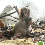 烏山獼猴保護區 (27).JPG