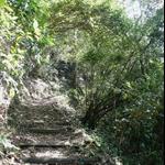 嵐亭往森林浴步道 (13).JPG