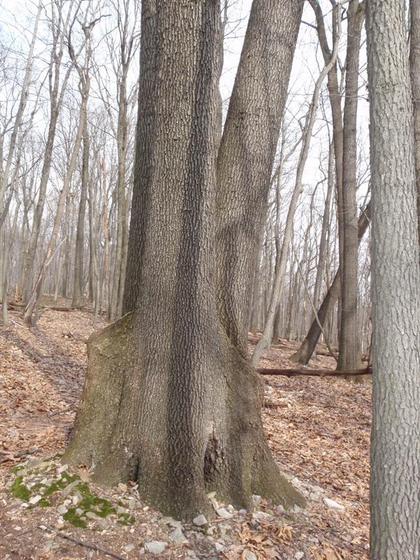Huge tree!!!