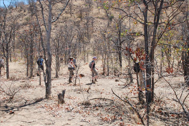looking for snares in the bush / à la recherche de pièges dans la brousse