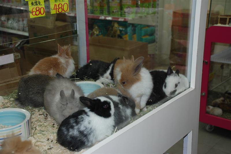 Pet Bunnies