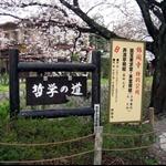 櫻之旅 - 京都