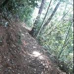 嵐亭往森林浴步道 (10).JPG