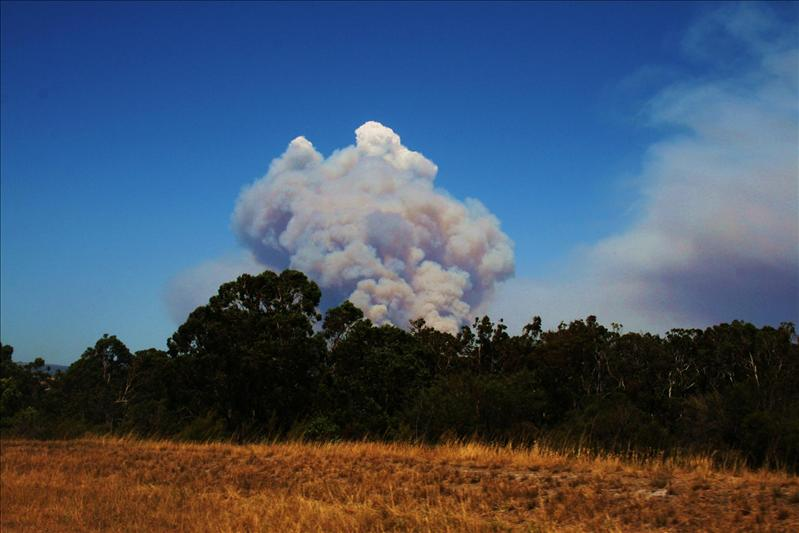 View of the bush fire.