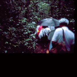 Tour por la selva