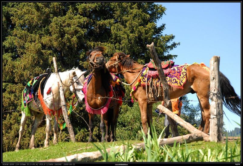 把头搁在马背上睡觉的马……