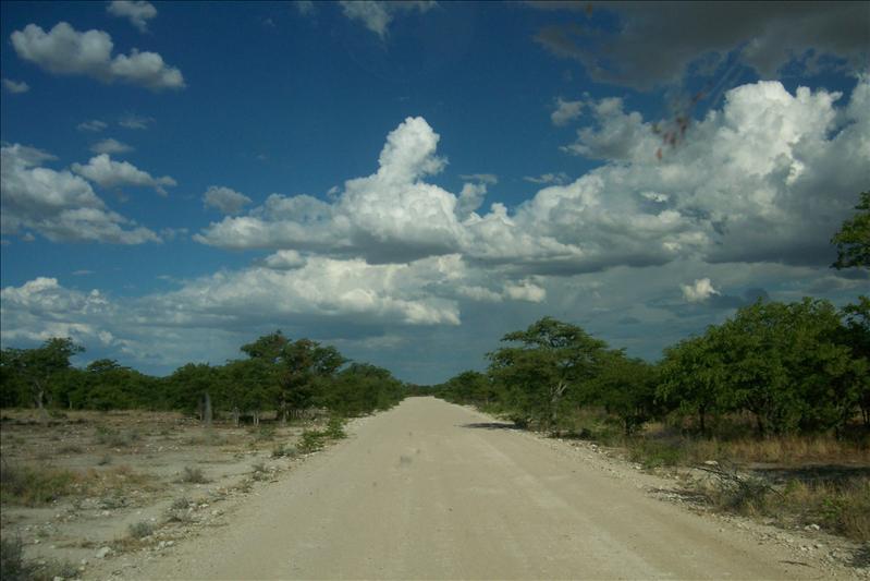 Etosha's road