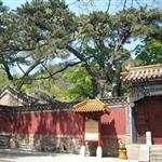 TanZhe/JieTai Temple(潭柘/戒台寺), Beijing