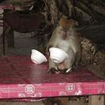 dobrze wychowana małpa używa łyżki