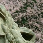 2009.03.12淡水天元宮賞櫻