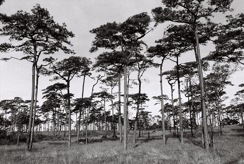 ILford400Pan20091023_018.jpg