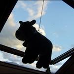 vache•ma chambre•2008