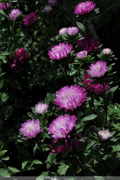 草原野花3