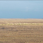 Karamaili 卡拉麥里有蹄類自然保護區