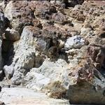 Rock Dassie / Daman des rochers