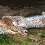 Gaia Zoo 2013