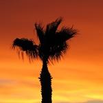 Phoenix Sonnenuntergang I