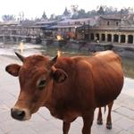 Pashupatinath Burning gats, Near Kathmandu   oct11