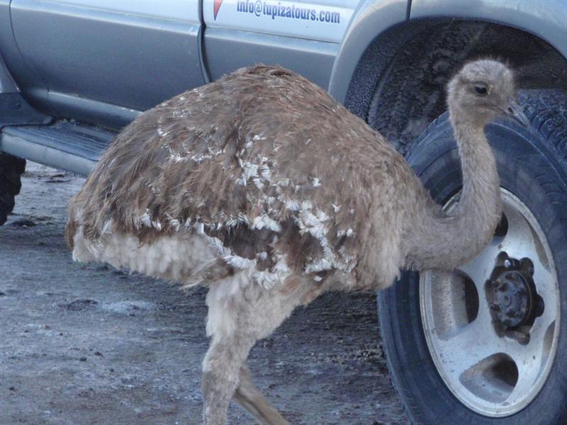 Our little Ostrich friend...