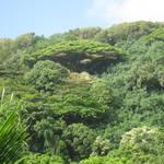 2011 Maui Day 7