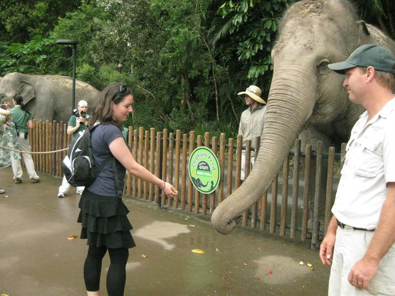 Hand feeding Asian elephants