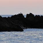 Waialea Bay.JPG
