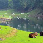 20130427 上下城門香粉寮 Shing Mun Reservoir to Heung Fan Liu