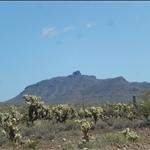 Fuzzy cactuses